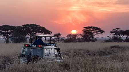 Going on a photographic safari Take a look at our top tips before you go
